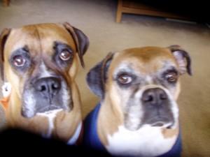 pe promo Molly and Lola